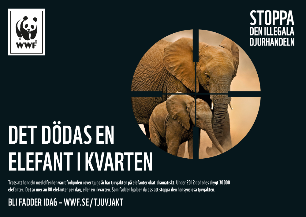 kikarsikte-elefant
